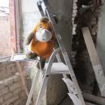 Die Maus im Haus